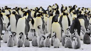 Penguin pasa a formar parte del algoritmo principal de Google